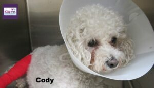 Coady after surgery